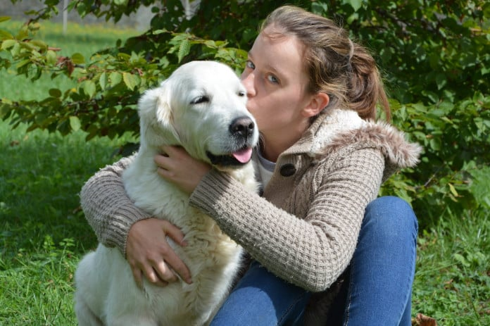 Der Golden Retriever ist der perfekte Familienhund.