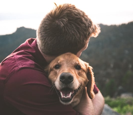 Ein glücklicher Golden Retriever mit dem Herrchen.