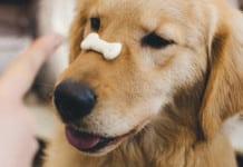 Mit Training findet der Hund seinen Appetit wieder.
