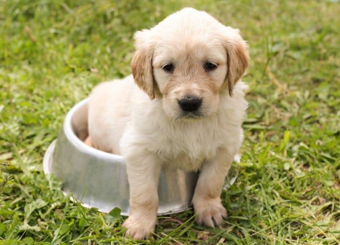 Das perfekte Hundefutter zu finden, ist gar nicht so einfach.