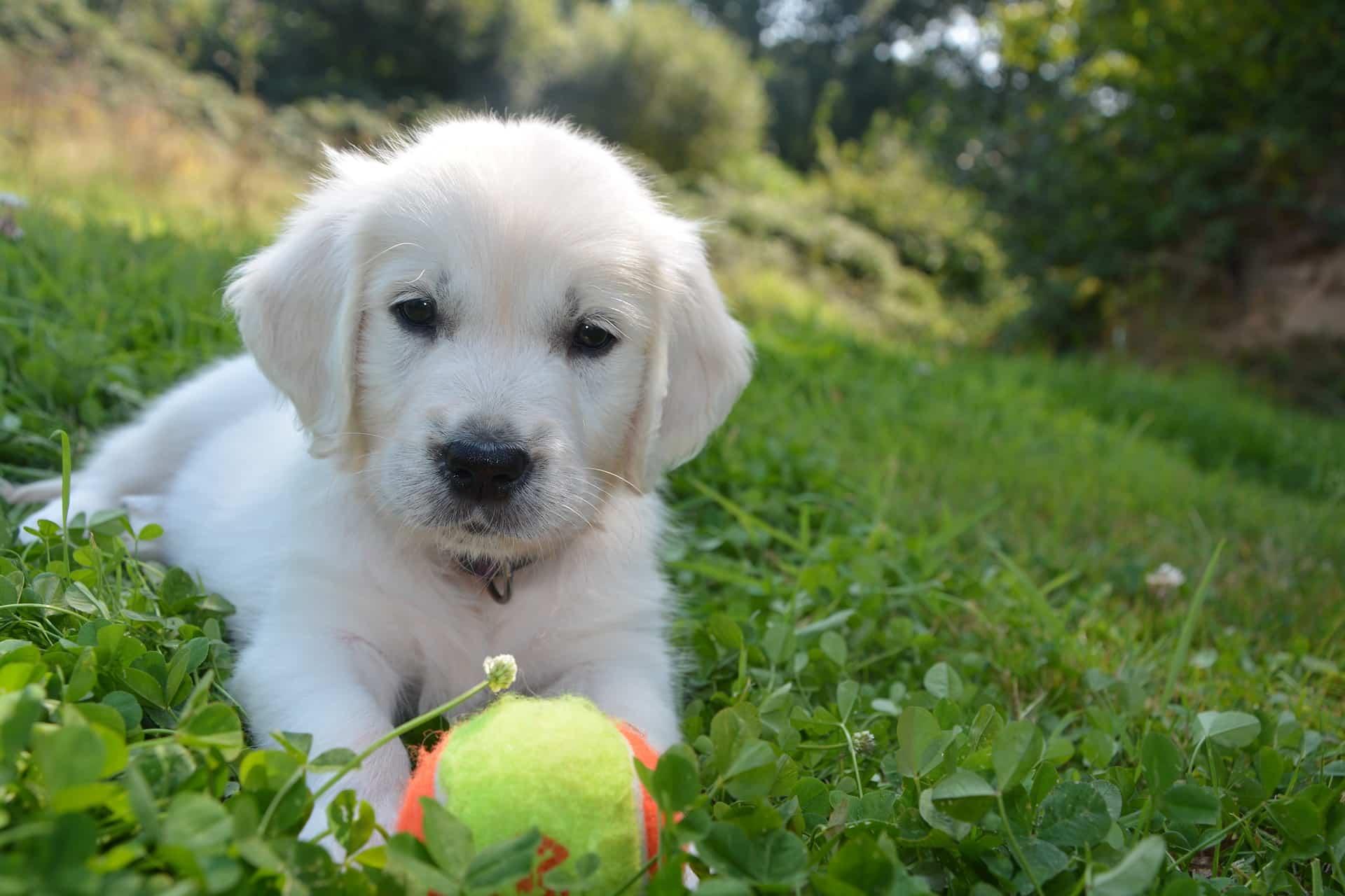 Ein Ball gehört auf jeden Fall zur Erstausstattung für den Hund.