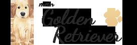 mein-Golden-Retriever.de