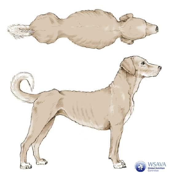 Grafik BCS Hund Untergewicht