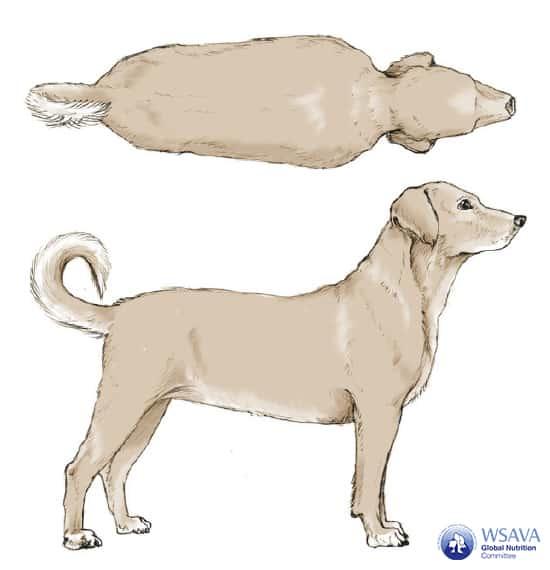 Grafik BCS Hund Übergewicht