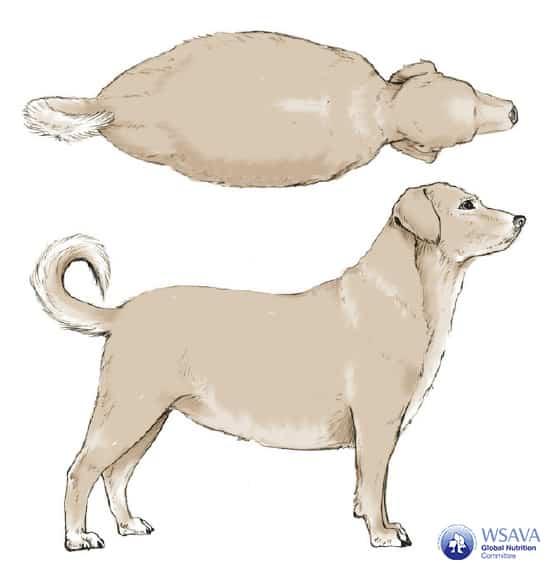 Grafik BCS Hund starkes Übergewicht